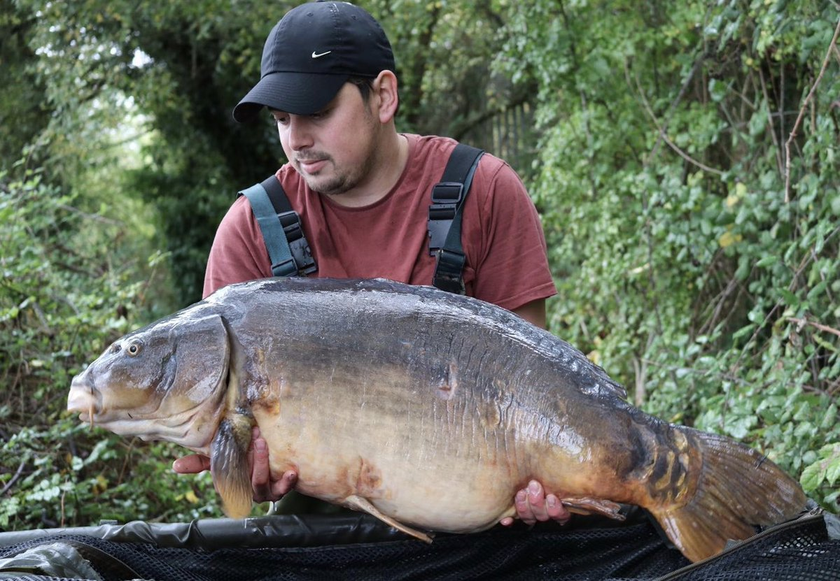 Worth seeing the other side...40lb 8oz #<b>Bigcarp</b> #carpfishing https://t.co/cJseNbNAWj