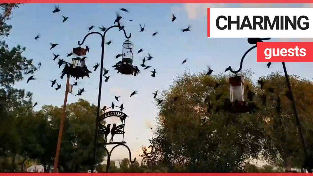 test Twitter Media - VIDEO: Woman wakes up to hundreds of hummingbirds on her front porch https://t.co/xEWf2bfCL9 https://t.co/95HsoUnwKn