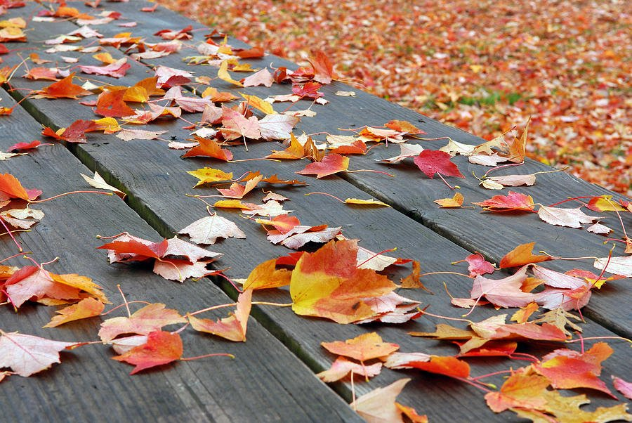 Fallen leaves upon the pavement racing in the wind She bundles up her scattered heart and rushes toward her sin He sits in his abstention #alone and unfulfilled Denial flavoring this pivotal morning experiencing the chill.  #vss365 ~Photo~ Lisa Phillips https://t.co/fByrvoRw19