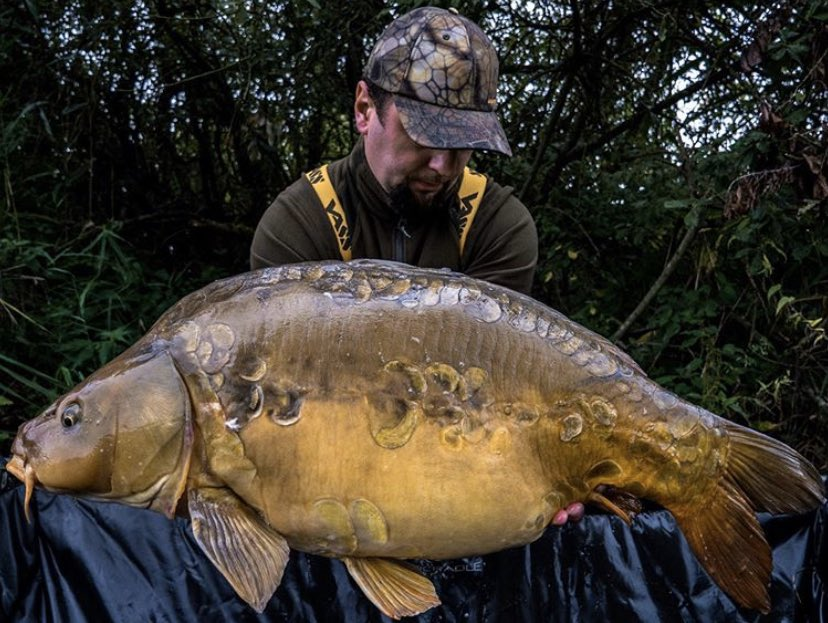 Victor is at it again with this <b>Stunning</b> catch 💪🏻🎣 Well done mate!!  @TheCARPbible