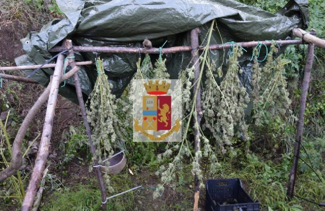 test Twitter Media - #Cronaca #Castellammare - Sorpreso a coltivare marijuana sui boschi di Quisisana, arrestato 32enne LEGGI LA NEWS: https://t.co/3EKDfjt2IH https://t.co/6oVABdlsE7