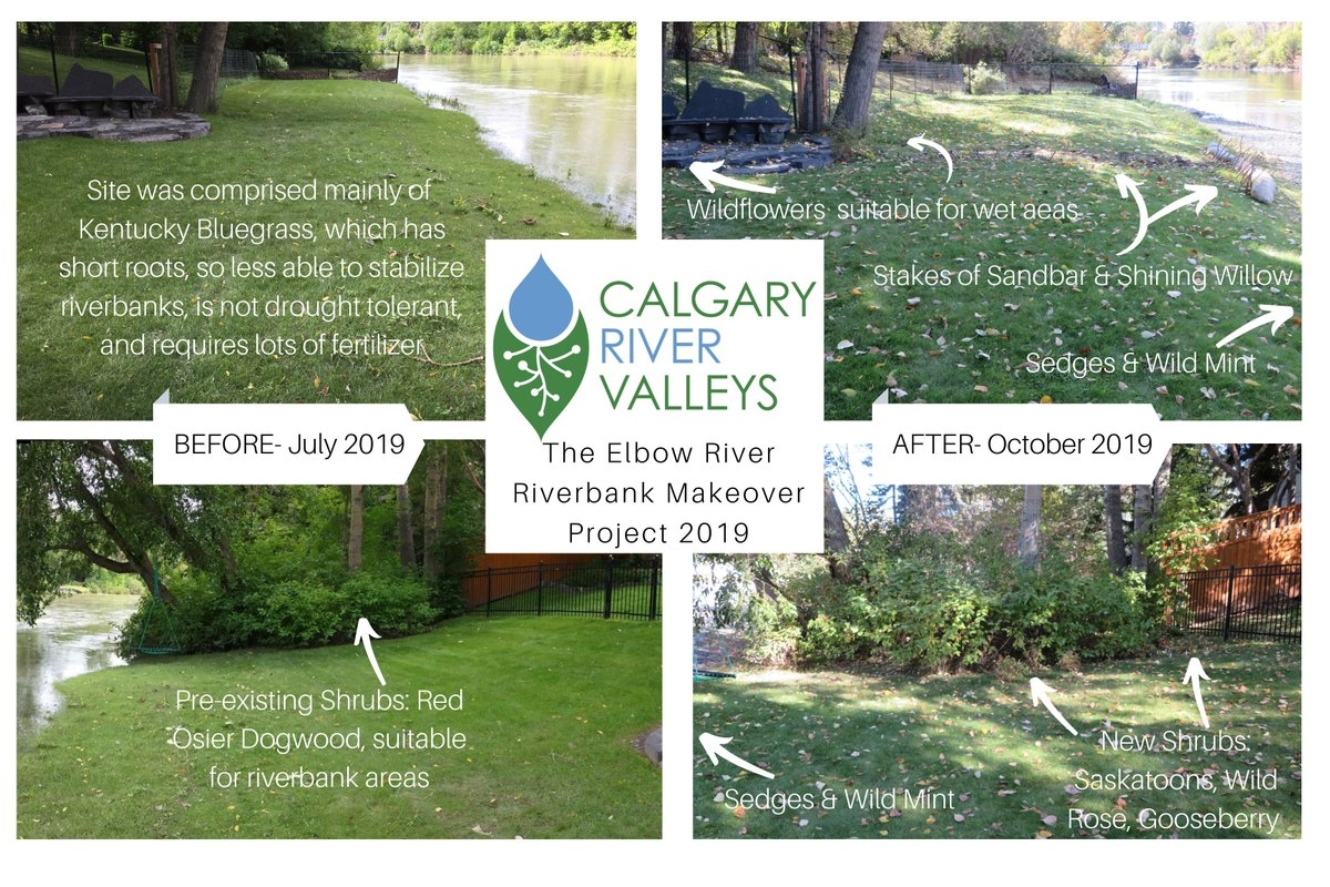 test Twitter Media - Our Riverbank Makeover Reveal event has been rescheduled to tonight, Oct 15. Drop in between 5:30 and 7 pm.  Look for the Calgary River Valleys banner in the 800 block of Rideau Rd SW & come directly to the home's back yard to see what we've done & why. #yyc https://t.co/mq64ZvO5zA