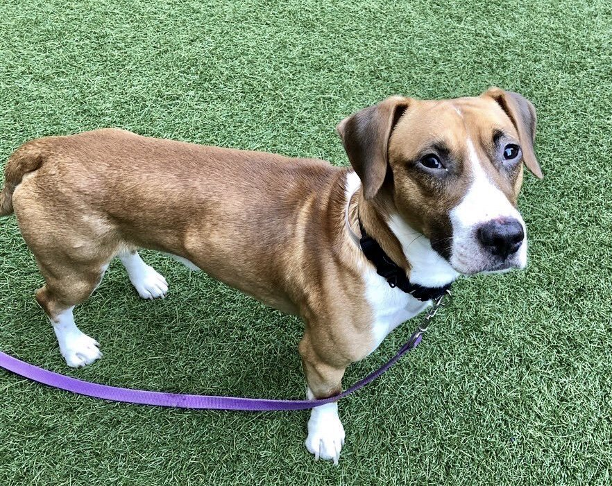 test Twitter Media - Drake is great with dogs, great with adults (scared by kids and raised voices) and his 'people' have now dumped him to die in this 21-dog @nycacc kIlling spree Thursday. Drake #78142 needs pledges for Rescue/F/A via  @TomJumboGrumbo. PLEASE RT DRAKE! https://t.co/m14CtpdBPq https://t.co/IpD3MeJXbE