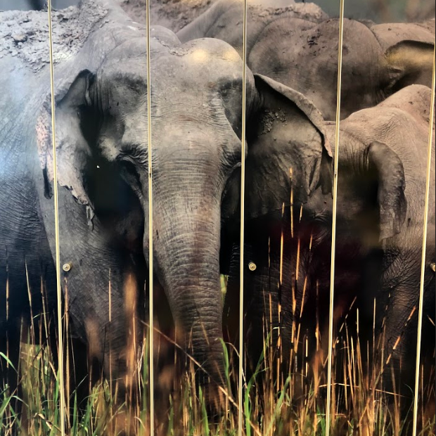 These elephants have found a home in our office 🐘 When making #WildKarnataka we learned that Karnataka has more wild elephants than any other place on the planet https://t.co/MrQhi95EOY
