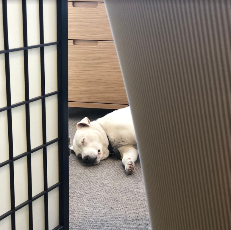 This is Alphie. He's native to Bristol and is skilled in tracking dog biscuits. He's often found in his natural habitat: his bed 🐶 #WorldAnimalDay2019 https://t.co/IJZYBIcSAB