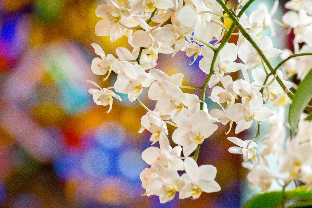 Le 13ème Festival International des Orchidées se poursuit samedi & dimanche...