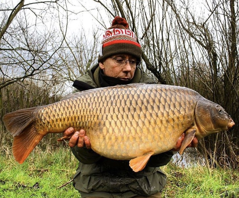 @JoeTurnbull69 with a <b>Beau</b>ty of a common 💪🏻🎣 well done Joe!!  @TheCARPbible   #Carp