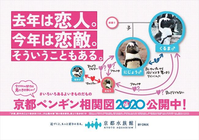 test ツイッターメディア - もう、わけがわからないよ!  元BLカップルがメスを巡って恋敵!? 京都&すみだ水族館のペンギンの相関図に新たな展開が - https://t.co/dQE7l5Rj3B @itm_nlabzoo https://t.co/9txw2vSHd2