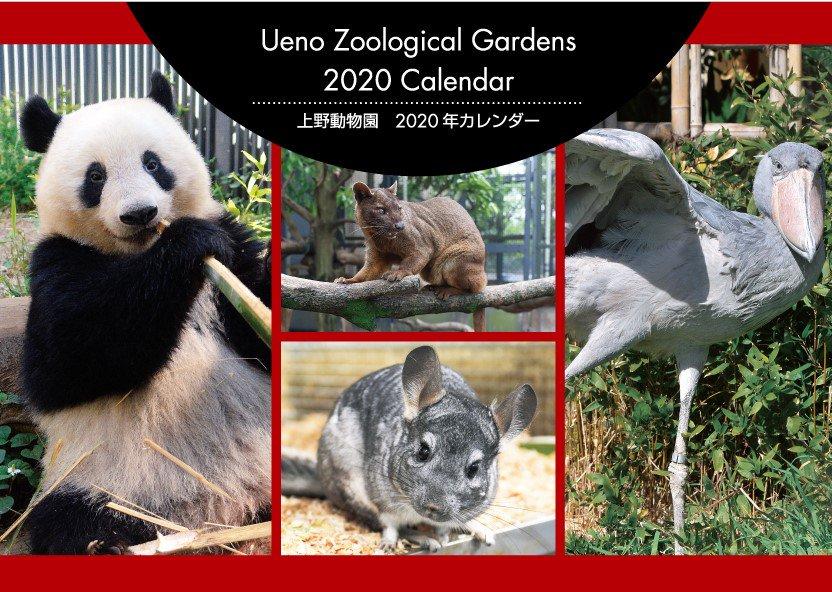 test ツイッターメディア - 10/11(金)新発売!! 「上野動物園 2020年カレンダー 税込880円」干支にちなんだチンチラや、ジャイアントパンダのシャンシャン等々、とっておきの写真が満載です!お買い求めは園内ギフトショップまで♪  #uzoo_g https://t.co/PxQAoHVNts