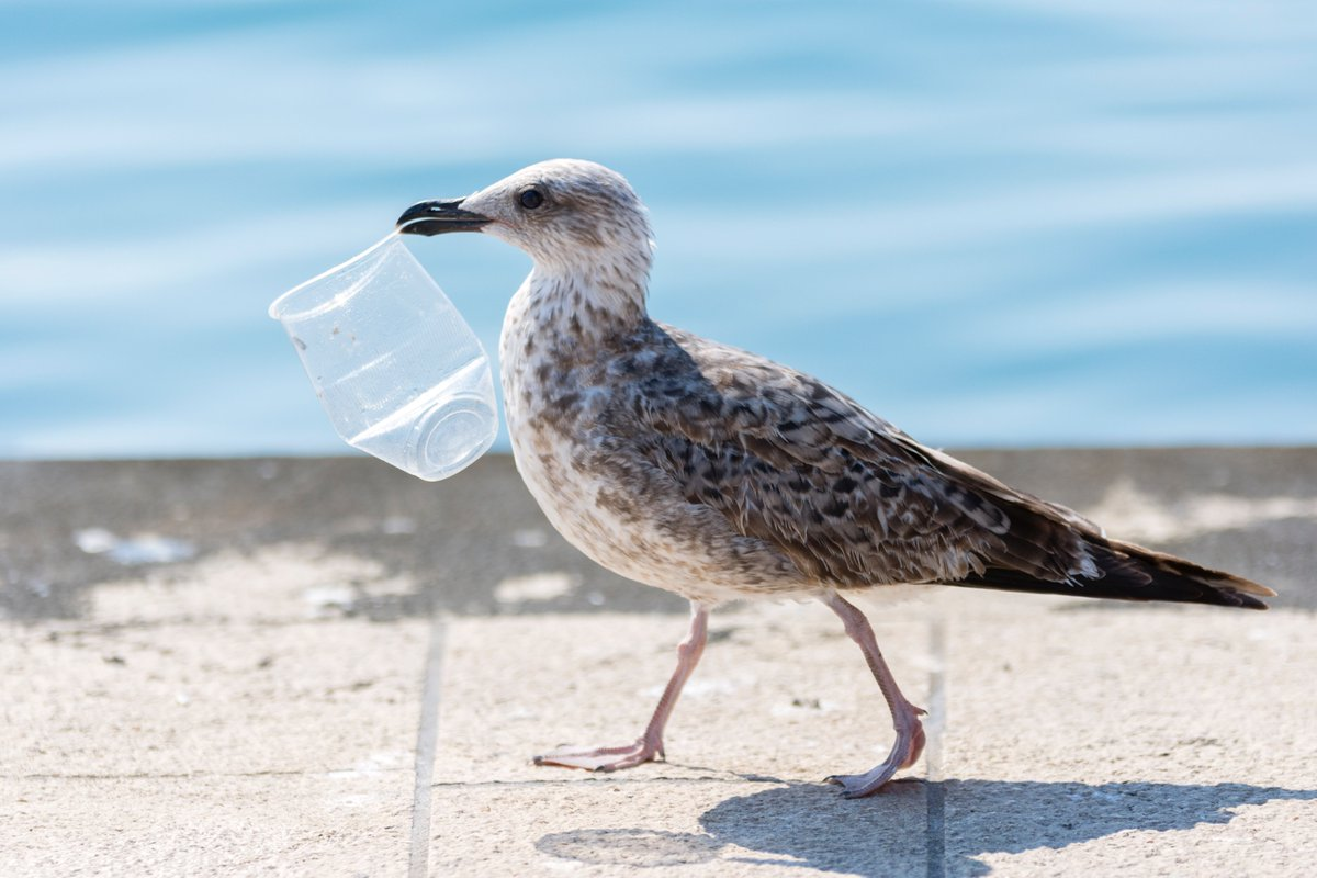 test Twitter Media - @WMBD It's estimated that 90% of seabirds have ingested plastic, and over 1 million seabirds are dying every year from the effects of plastic pollution, which is why PI is working to protect China's vital coastal wetlands: https://t.co/ayRec4YEmz  #WorldMigratoryBirdDay @WMBD https://t.co/9DRjOaHZZP