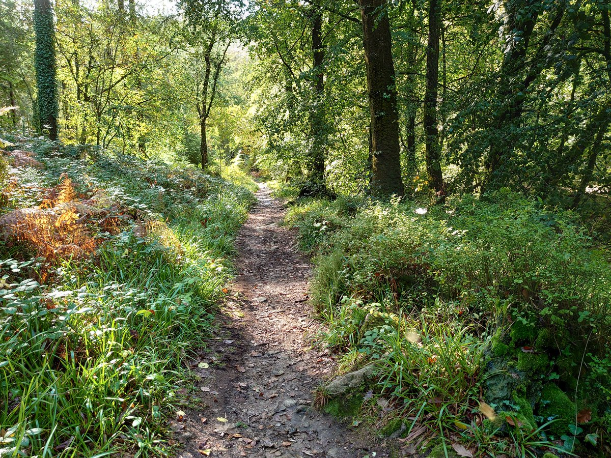 test Twitter Media - Pit Hill Woods, on the opposite side of the River Erme in Ivybridge. The autumn colours are starting to show, just, but it's more green and wet then anything else. A few more weeks needed (and some drier weather...)  #Ivybridge #Autumn #Woods #Wet #WellieBoots https://t.co/37ZQgKrRaG