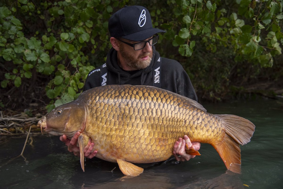 45lb on the nose, new KARPER Pastel <b>Popups</b> coming up trumps. #karperltd #carp #carpfishing #f