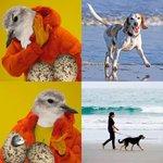 RT @AvesArgentinas: Acordate: los perros en la playa siempre atados para que no afecten a las @avesplayeras https://t.co/HGe0sCwiru