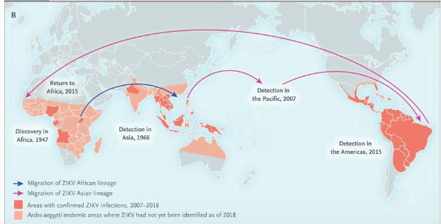 test Twitter Media - #Zika #Virus Infection — After the #Pandemic  Although transmission of ZIKV has declined in the Americas, outbreaks and infection clusters continue to occur in some regions, such as India and Southeast Asia.  https://t.co/0ftgcxdS0v https://t.co/Q0BvutCv3o