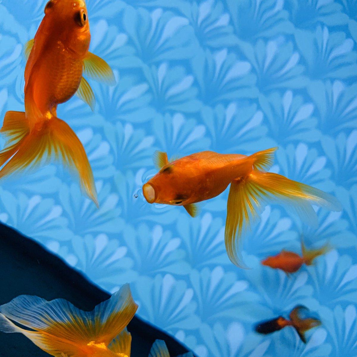 test ツイッターメディア - #カメラロールをしゃぁぁあぁぁあぁってやってピタっと止めた画像がエロ画像でも何でも問答無用で晒せいいねで継続見た人絶対強制 美大生に描いてもらったリオくんとすみだ水族館の金魚(特設展示)だった。 https://t.co/9eydXjNRAa