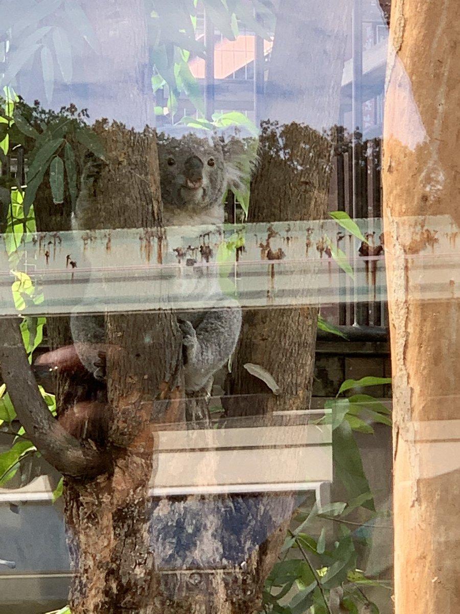 test ツイッターメディア - 東山動物園! 秋まつりで無料開放だったのもあって混んでた!! 動物たちがすごく近くて1人で興奮しながら観てました(*◎ω◎)=3 https://t.co/VtR9AHxciN
