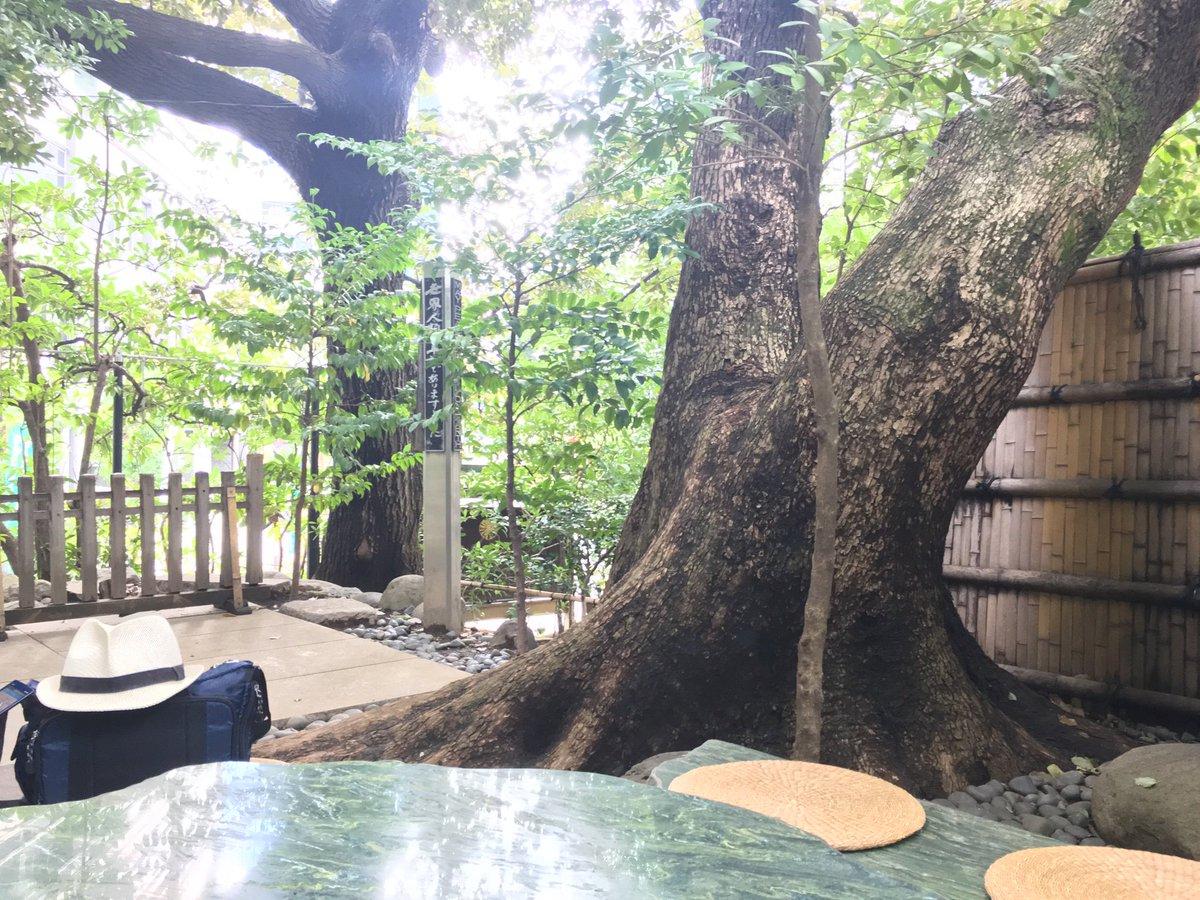 test ツイッターメディア - 本日は連休中 唯一 晴れ間がのぞく日とのことなので 久しぶりに東京大神宮を訪れています。 本日 赤福はなかったですが暖かいお茶が振舞われていました。 https://t.co/LSU2x78wZ4