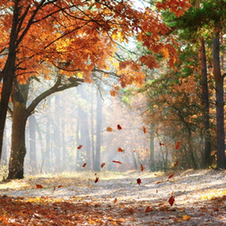 Falling leaves trickling down musical notes of autumn telling stories  for those who choose to listen  #BeautizmLove https://t.co/QM4ER9BFHB