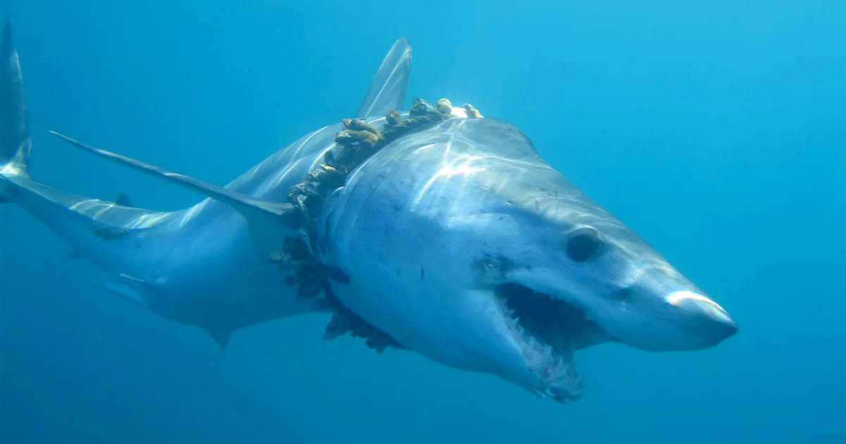Twitter helps reveal deadly toll ocean plastic takes on sharks and rays