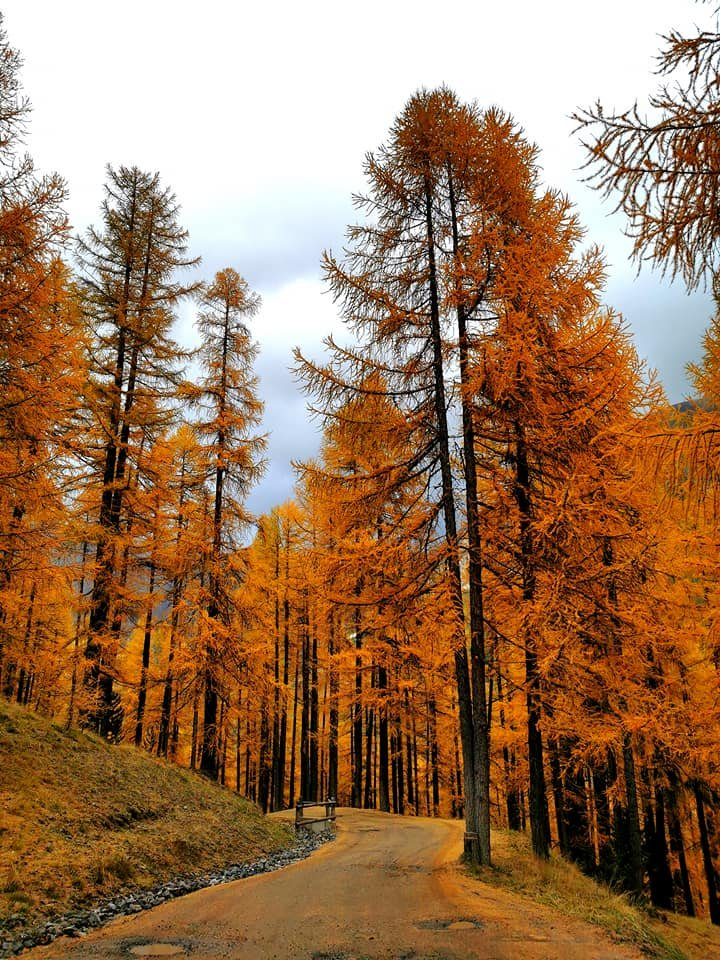 Fall colors at 1816 mt high, in the Italian Alps 🧡 (pictures by Livignoismagic) https://t.co/ufM1Hyt7oU