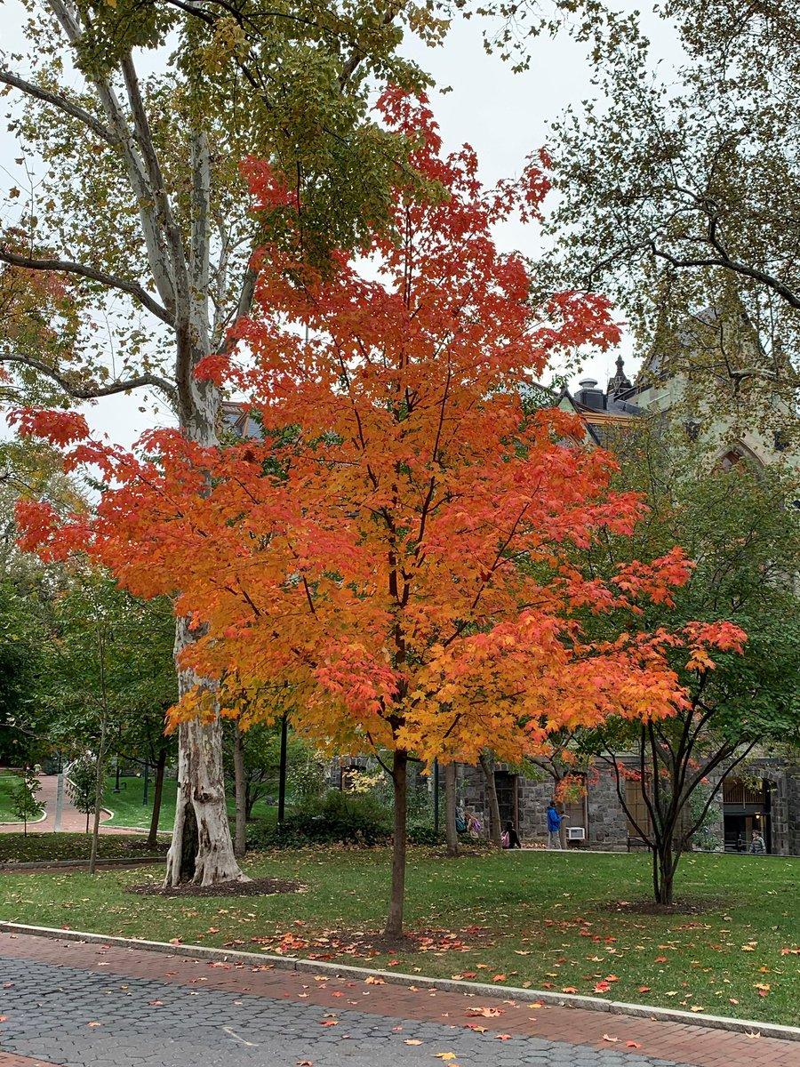 test Twitter Media - Enjoying the beautiful @penn fall! https://t.co/T9hvpQsEdD