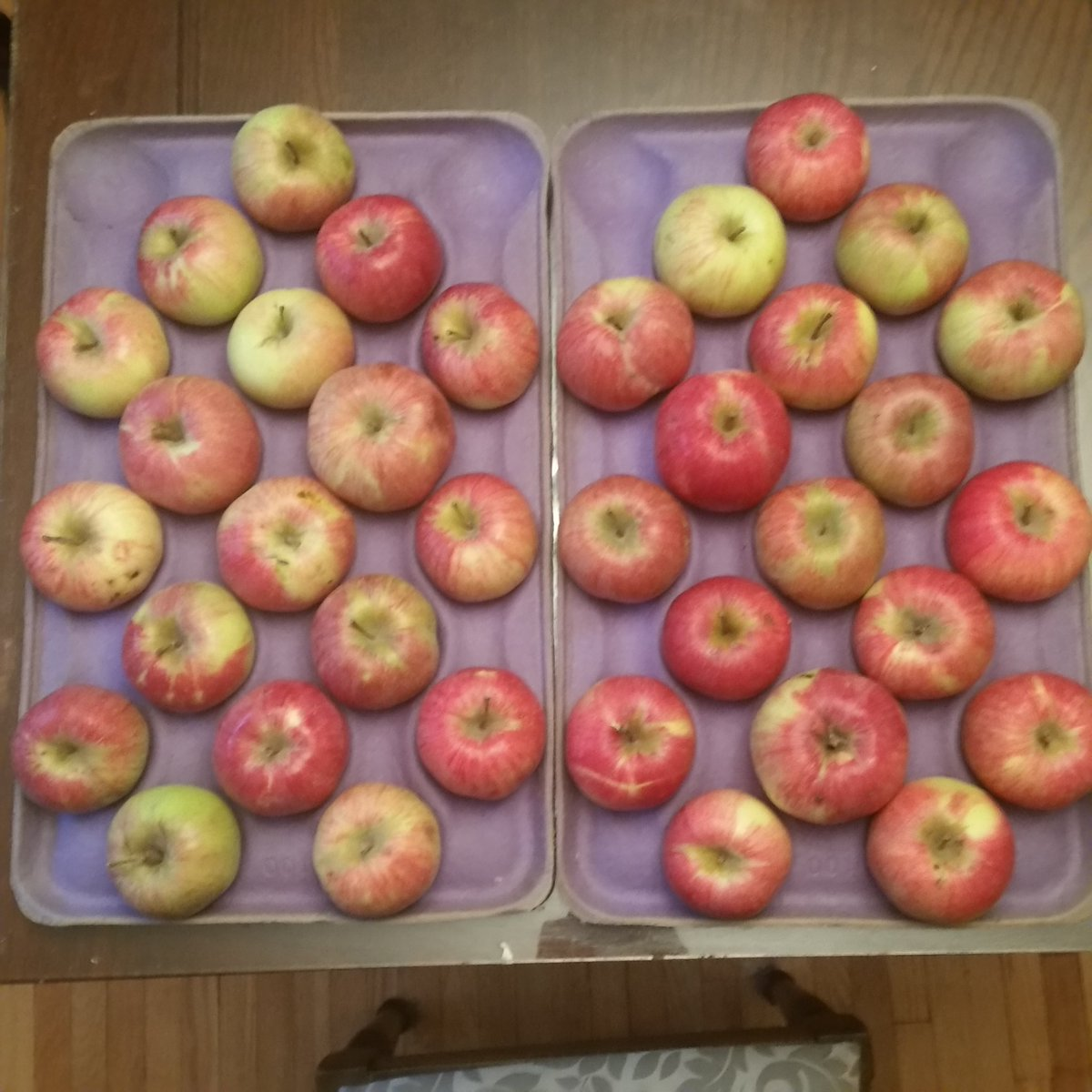 test Twitter Media - RT @Trianglemancsd: How many apples? How did you count? https://t.co/0KpcIf4YiG