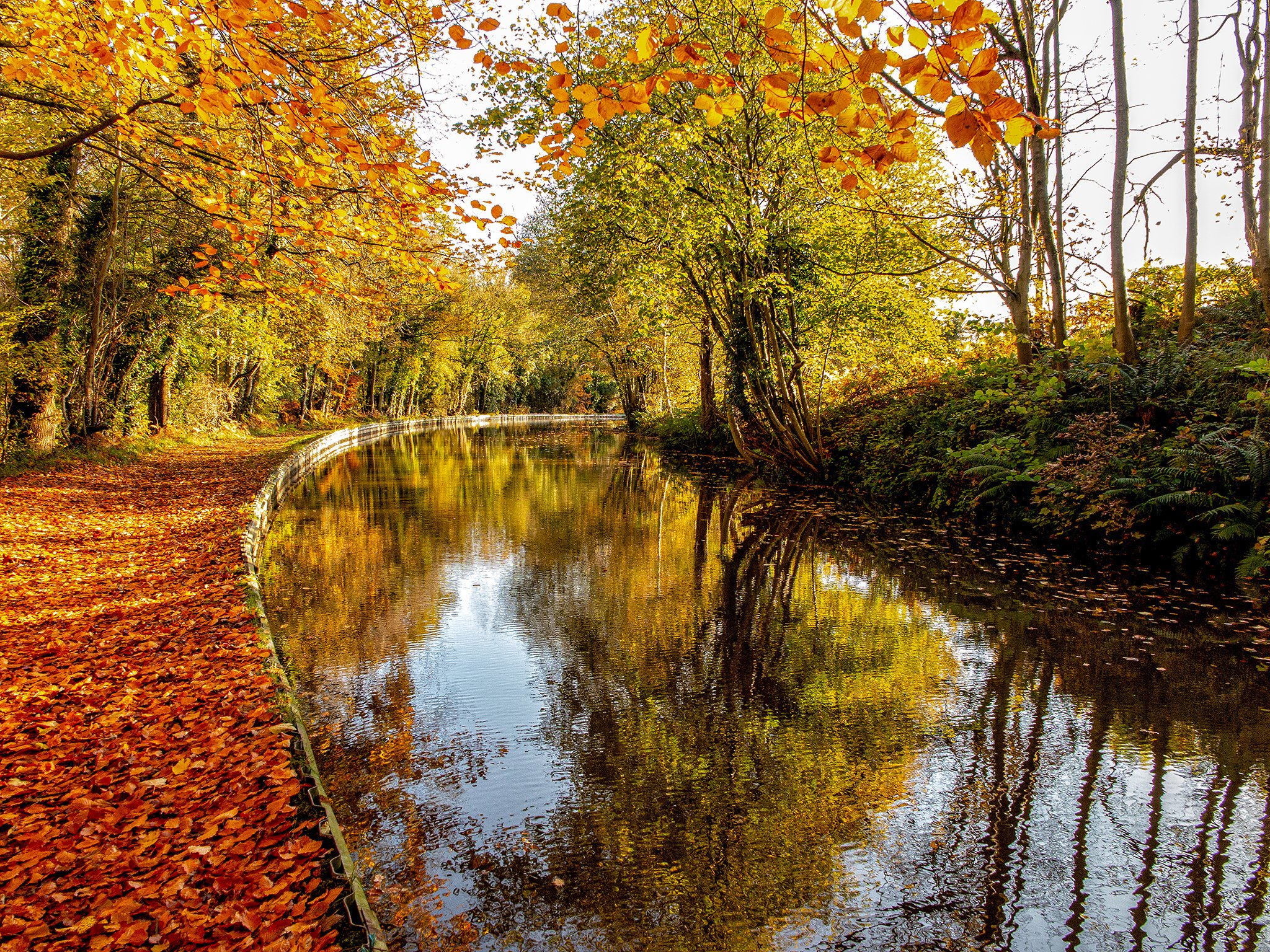 Autumnal Bend  It was amazingly bright along the canal by Blake Mere this morning. The sun shining in was amplifying the colours beautifully.  #canal #shropshire #autumn @CanalRiverTrust @LynealTrust #ellesnere https://t.co/9fmNDR2Pec
