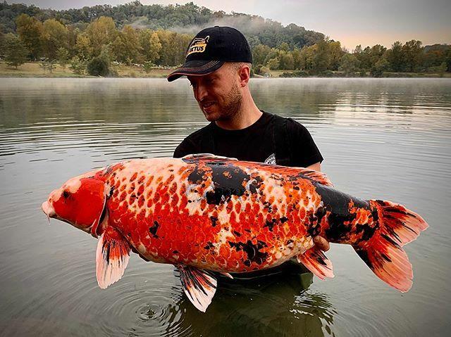 Concurso CARPdiem @<b>Dynamite</b>baits !  #carpfishing #koicarp #carp #fishing #carpdiem https://t.