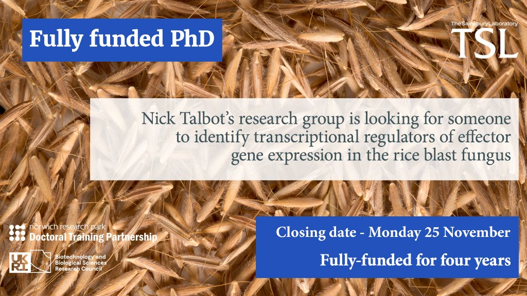 test Twitter Media - Fully-funded PhD  @talbotlabTSL research group is looking for someone to identify transcriptional regulators of effector gene expression in the rice blast fungus  Applications close Monday 25 November  https://t.co/GjhNqhTl08 https://t.co/dRHOwIqfxh