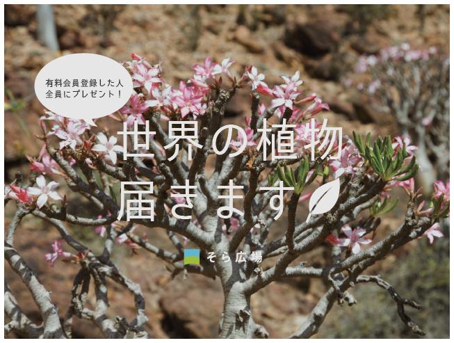 test ツイッターメディア - #プラントハンター #西畠清順 が代表を務める #そら植物園 オフィシャルクラブ「#そら広場」 メイン特典として1年に1回、西畠清順がセレクトした植物が届きます。 11月末までにご入会の方へ、本年度の植物が届きます!  https://t.co/1ne8QtD9km https://t.co/uCqtoh4arR