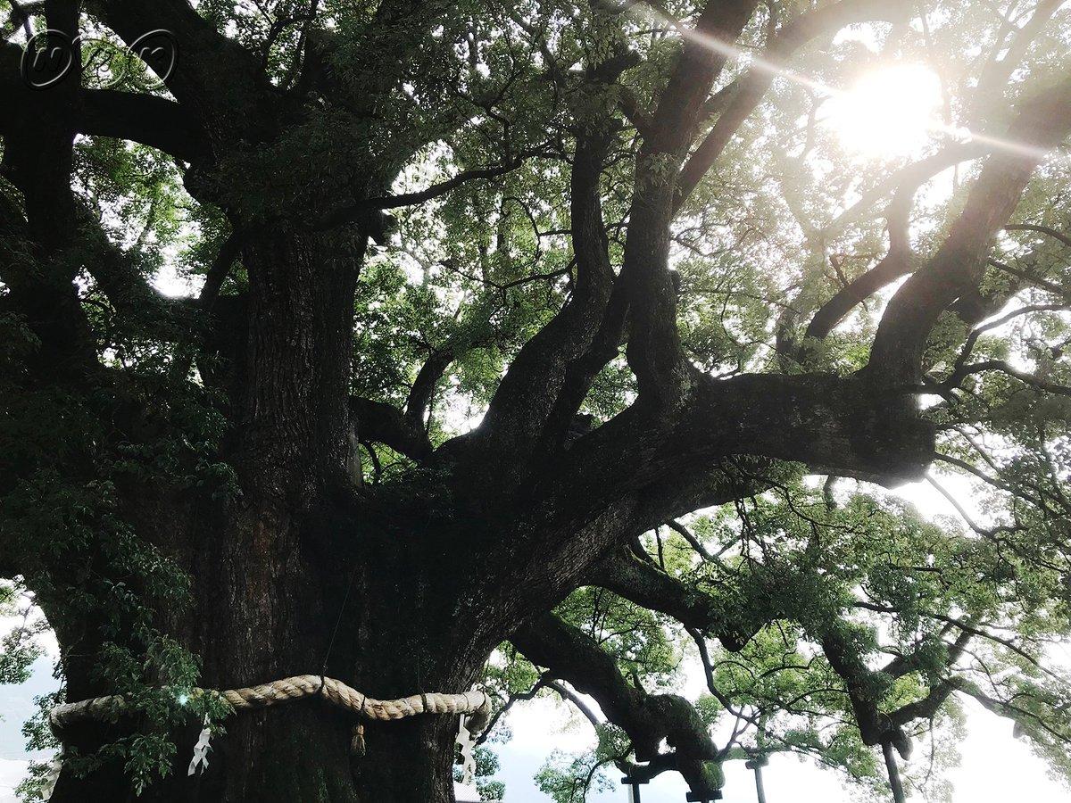 test ツイッターメディア - ✨前園真聖しこく絶景たび✨ 明日のひめポン!で放送🎬 視聴者オススメのパワースポット👍「加茂の大クス」を目指せ🌳‼ 甘党の前園さん感動🍓絶品スイーツ🍓も登場☺  #前園絶景 #加茂の大クス #樹齢千年 #森みたい #japan #shikokutrip #oldtree https://t.co/cs5qRDDCa1