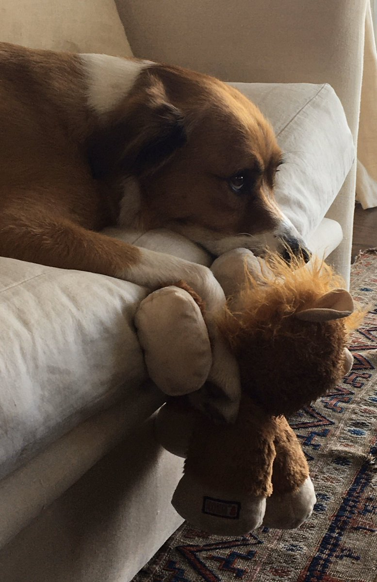Reconnecting with his west coast lion.