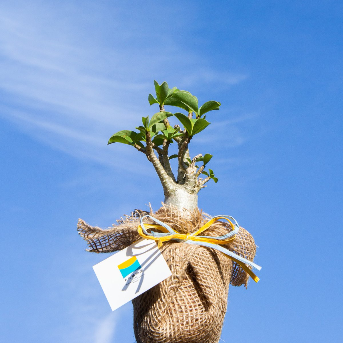 test ツイッターメディア - #プラントハンター #西畠清順 が代表を務める #そら植物園 のオフィシャルクラブ #そら広場  https://t.co/Abz7dishAV  クラブメンバー(有料会員)になると、毎年、西畠清順が選んだ #植物 が届きます。 無料で登録できるメルマガのメンバーも募集中!会員だけが参加できるイベントなど企画しています🌵 https://t.co/1q7rCMMpeg