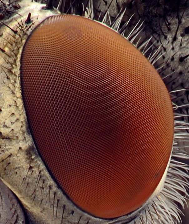test Twitter Media - House fly has red compound eyes. Each eye contains 4000 lenses that enable visualization of different pictures at the same time. Future iphone. https://t.co/ZxGyQUDF1s