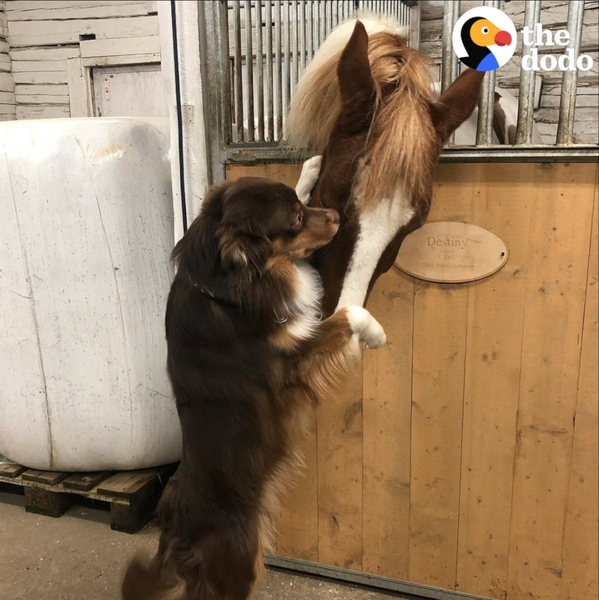 Dog can't stop hugging his favorite horse 😍