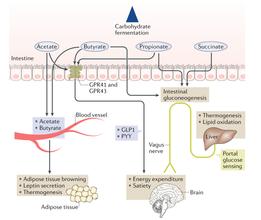 test Twitter Media - #MustRead Review from Ellen Blaak et al - Gut microbial #metabolites in #obesity, #NAFLD and #T2DM https://t.co/ce25HyIDad #diabetes #microbiota https://t.co/O3B4bCwXWP