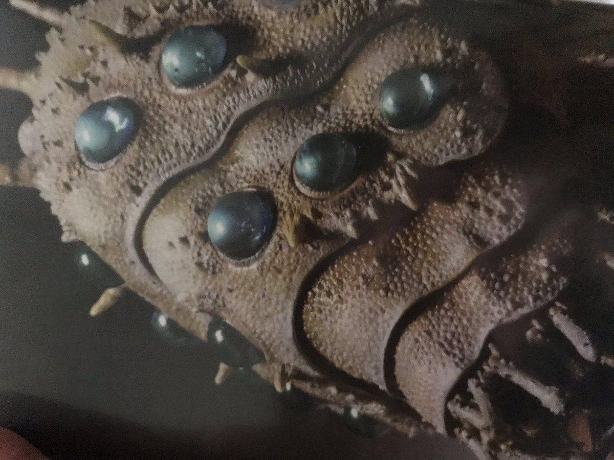 test ツイッターメディア - #ジブリの大博覧会 #岩手県立美術館  造形家の竹谷隆之さんが総指揮を取った王蟲の世界…すべてが素晴らしかった。  特にムシゴヤシやその周りの植物や菌類がすきだった。 大王ヤンマ、 ウシアブ、 ヘビケラ、  想像力とは、こういうことさ。  と「紅の豚」の名コピーに倣って呟きたくなるのである。 https://t.co/Nbyw61F1eR