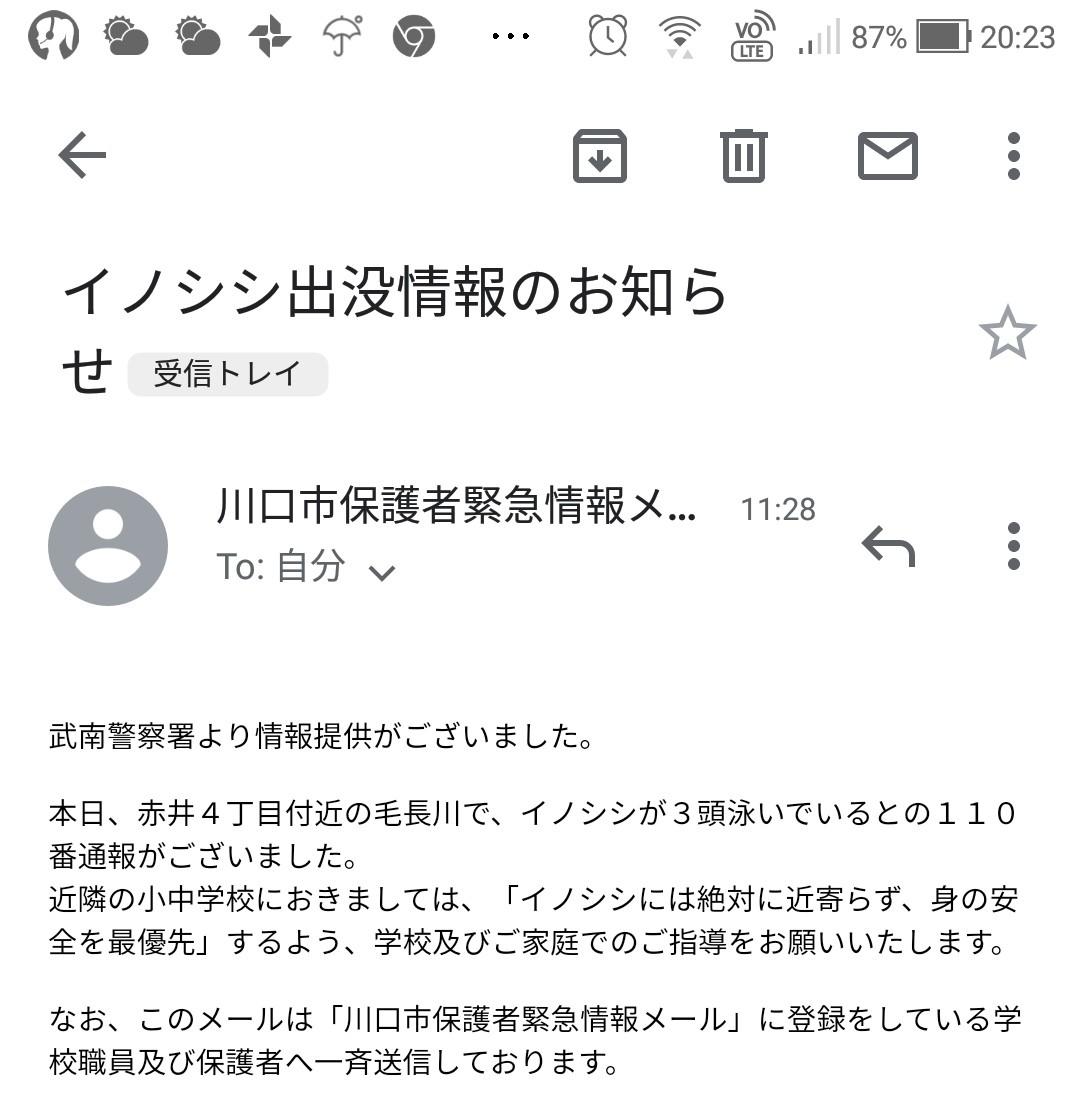 イノシシ 目撃 通報