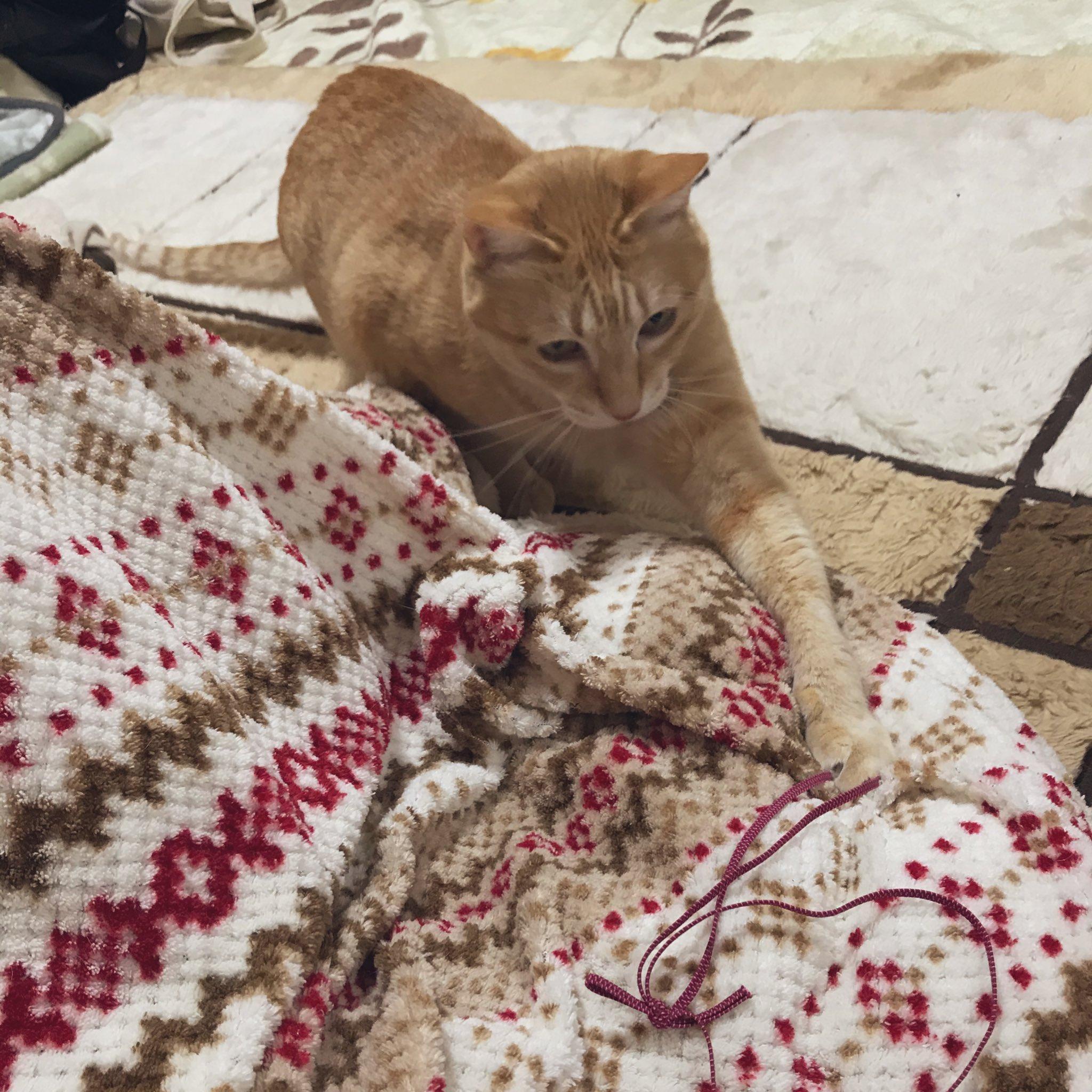【かわいい】ひたすら癒される画像おはようございます!猫が布団で寝ていますw