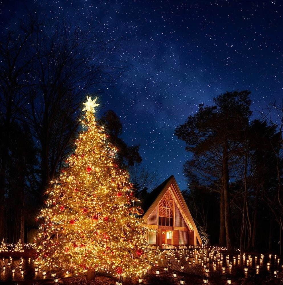 test ツイッターメディア - 軽井沢高原教会「星降る森のクリスマス 2019」森の中のキャンドルナイト&巨大クリスマスツリーも - https://t.co/OYhdvs85e0 https://t.co/jHfHpZ6GLv