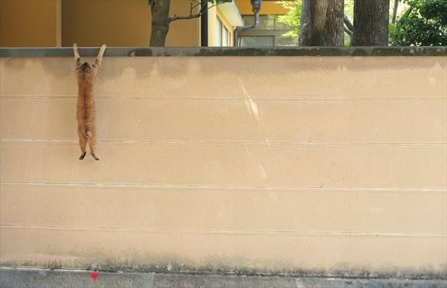 test ツイッターメディア - 「見て! 見て!! 笑っちゃう!! カワイイ❤❤ 猫」  写真集『必死すぎるネコ』を黒柳徹子さんが激推し https://t.co/ocDz2gbVh0 @itm_nlabzoo https://t.co/0RniljdFXH