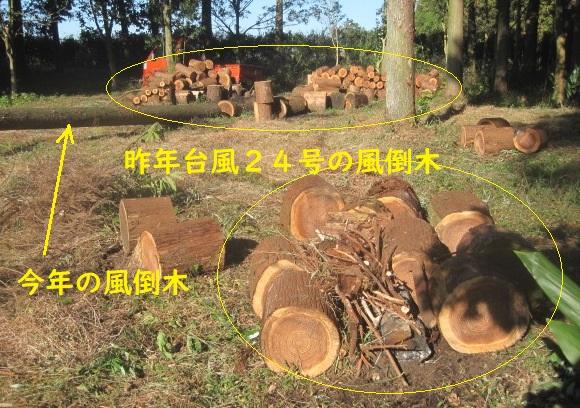 test ツイッターメディア - 昨年台風24号の風倒木焼却中。 昨日で杉林内の焼却作業は今年の風倒木を除き大体終了。 今日より杉林の外へ運び出していた杉丸太の焼却作業を開始。焼き場の下には切株が有り一緒に焼却する、ただし地表面より出ている部分のみ焼却。 https://t.co/olEisGJ5JG