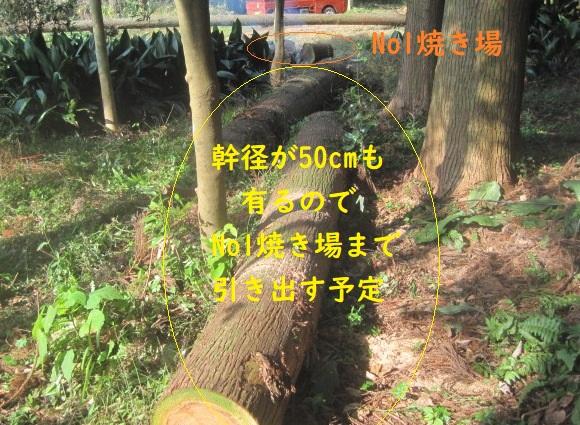 test ツイッターメディア - 昨年台風24号の風倒木処理続行中。杉切株を地際で切断中に杉皮の間よりヤマヒルが出て来た。裏山雑木林の風倒木は幹径が50cmも有るのでチエンソーで少し長めに切断した、後は近場のNo1焼き場に向けて転がすか、又はチエンブロックで引き出す予定。 https://t.co/KoGm2704FN