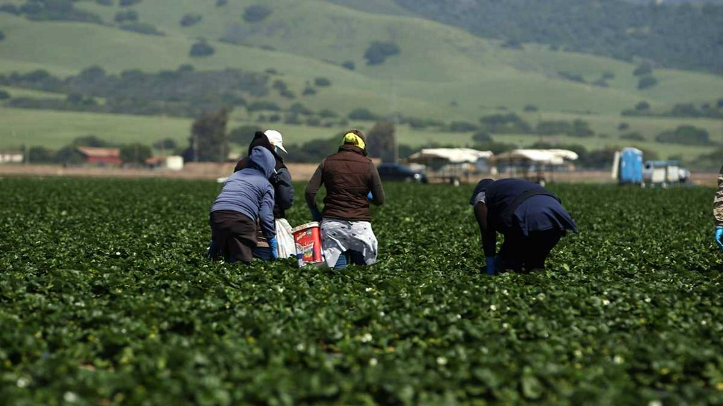 test Twitter Media - House votes to provide pathway to citizenship for thousands of undocumented farmworkers https://t.co/rAb11YlCn0 https://t.co/aRxkWk0wvZ
