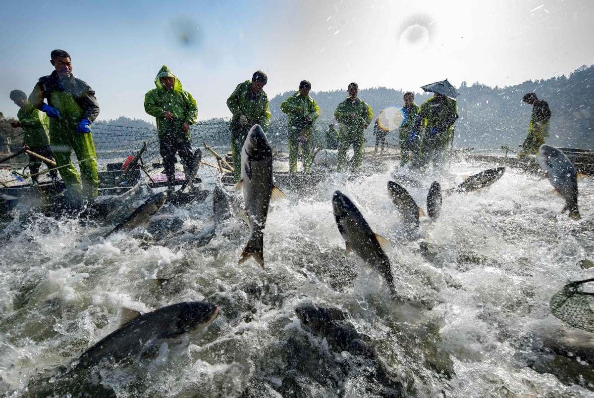 Bumper #harvest! Fishermen haul in a massive net containing leaping #fish during a winter fishing event at Xiannv Lake in Xinyu, E China's Jiangxi https://t.co/p5jhF4ZhVx