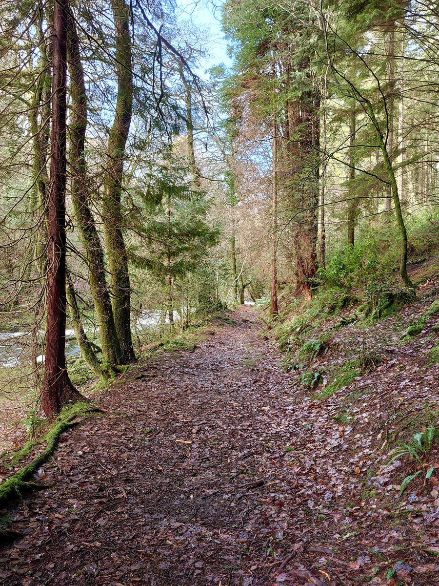 test Twitter Media - Weekend Woodland Walks (with a hint of blue sky) in #Ivybridge  #Devon #Woods #Walk #River #Photography https://t.co/JZ7KRvKyKe