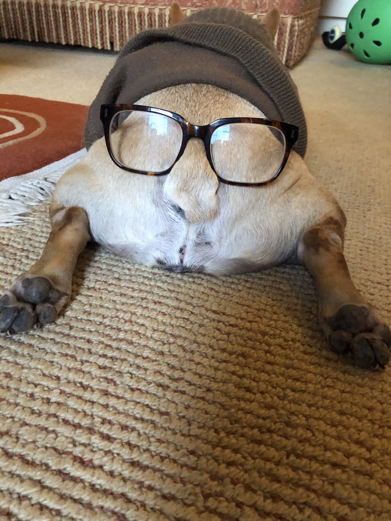 It doesn't take much to make a sleeping french bulldog look like a hipster barista.