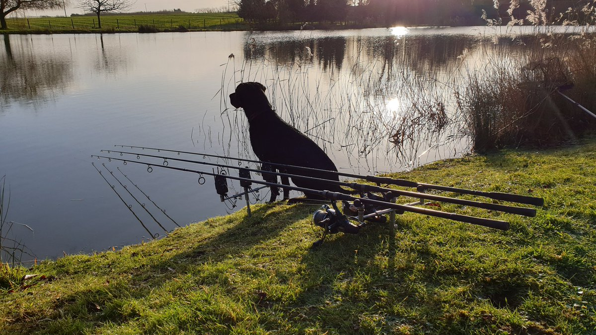 Quite this morning even the dogs on watch @cherry_carp @wellcarpy @hogg_dawn #carpfishing https://t.