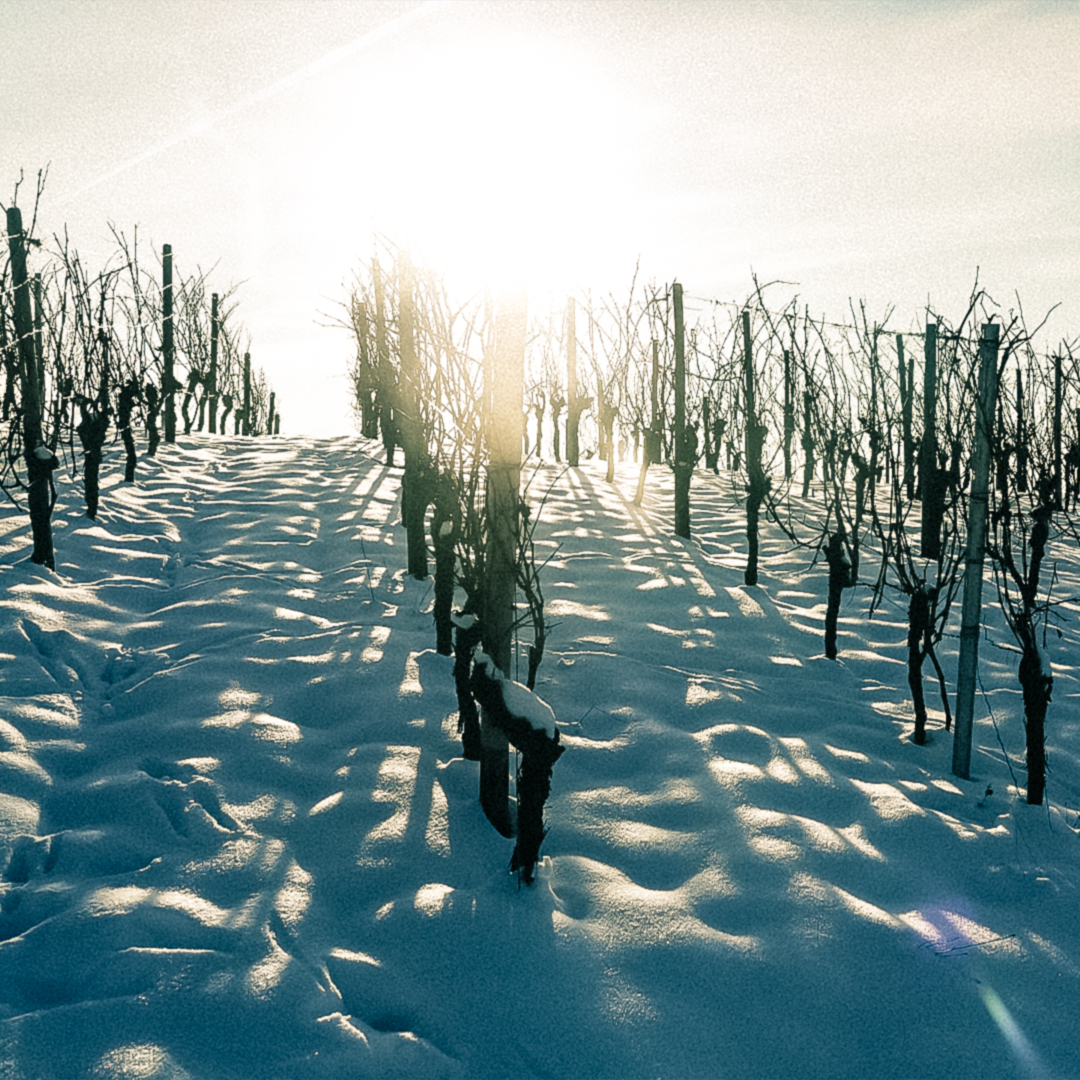 Snow is part of the conditions in which our vineyards develop and it also contributes to our wines being as they are. That's why, today, on World Snow Day, we want to toast for it. ❄🍷 https://t.co/Il2Dj95zxA
