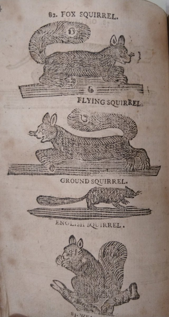For #SquirrelAppreciationDay we have illustrations of squirrels alongside their description as an animal that will 'leap from Bough to Bough, crack Nuts, feed on Fruits and Vegetables; and is very acceptable to the Ladies' @NtlMuseumsScot